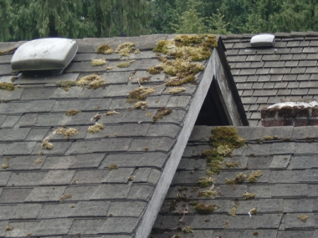6 good reasons to clean your roof the citywide blog - Reasons get roof cleaned ...