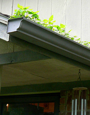 How To Keep Plants From Growing In Your Gutters