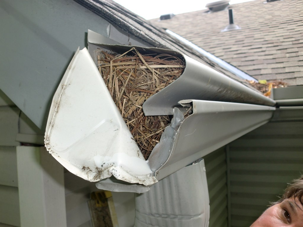 Preventing Birds From Creating Nests In Your Gutters